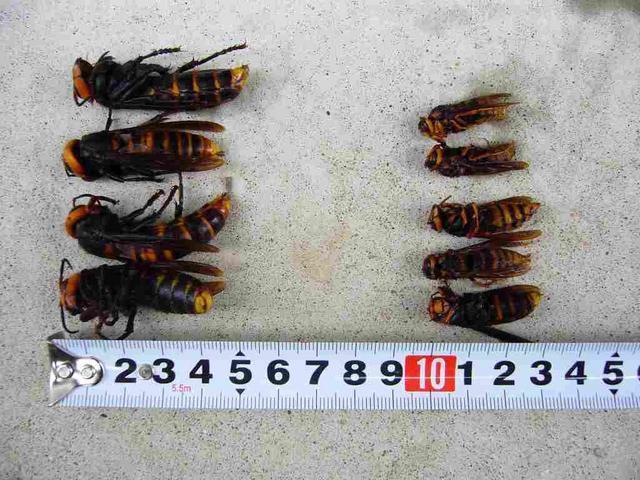 5.スズメバチに注意